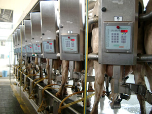 Milking area